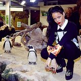 Rihanna got up close and personal with a group of penguins. Source: Instagram user badgalriri