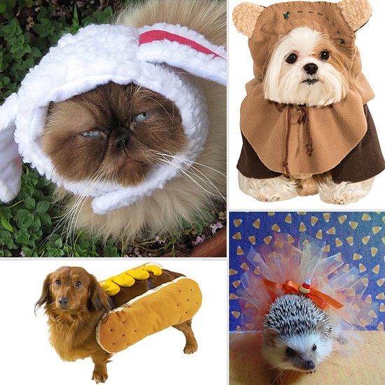 The Cutest Halloween Costumes For Pets