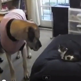 Cats Can't Stop Stealing Dog Beds I Video