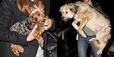 Must Love Dogs! Test Your Celebrity Pet IQ