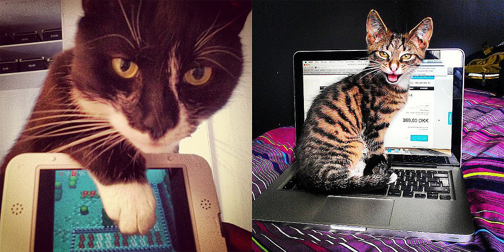 10 Pets That Would Like Your Attention Right Now