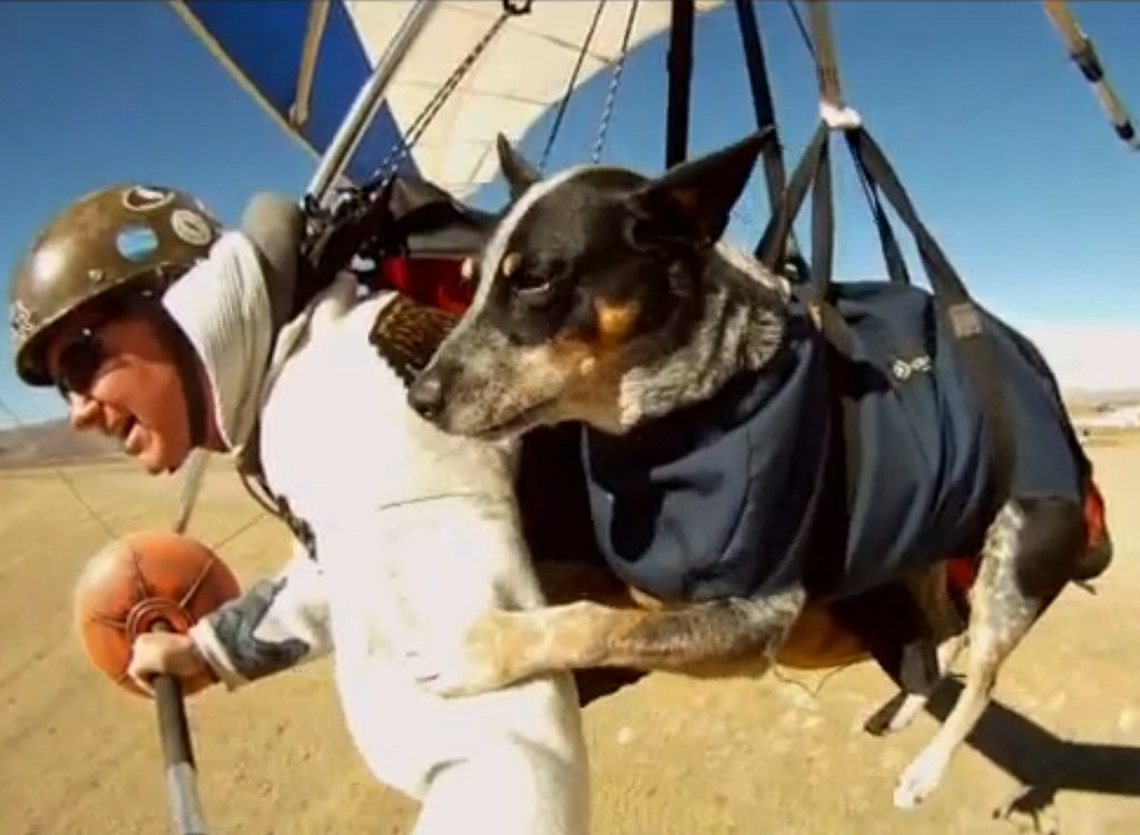 A Man Hang Glides With His Therapy Dog