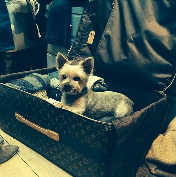 This little stowaway tried to sneak into Hilary Duff's suitcase. Source: Instagram user hilaryduff