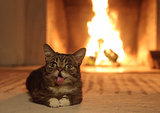 Lil Bub and Digital Yule Logs Warm the Hearth