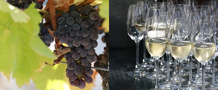 From Grape to Glass: How Sparkling Wine Is Made