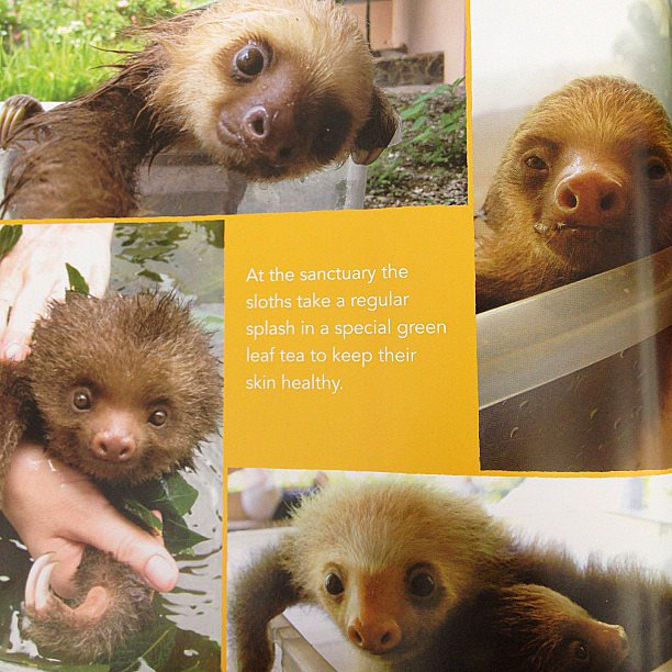 Killing us with cuteness: A Little Book of Sloth.