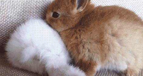 Go Away Bunny