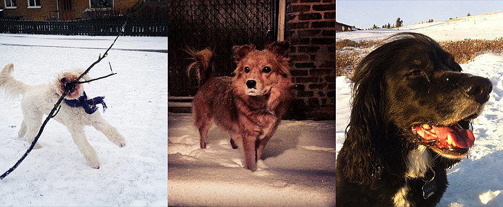 Instagram Challenge: Your Pets Love Winter!