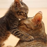 Pets Kissing | Pictures