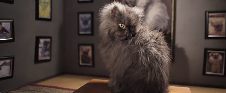 Goodbye, Minions: Colonel Meow Takes a Bow