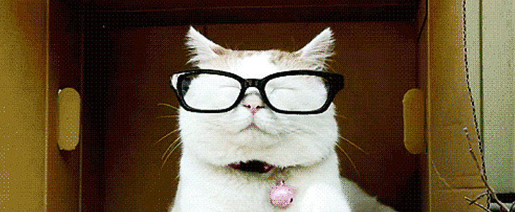 The Ultimate Collection of Silly Cat GIFs