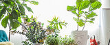 10 Tips For Keeping Your Fig Tree Fit as a Fiddle