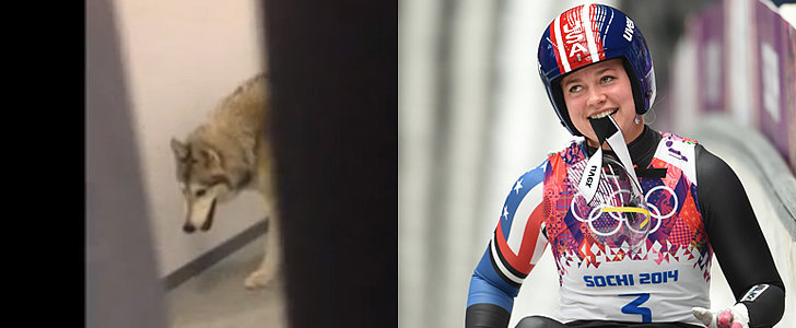 Here's the Truth Behind Kate Hansen's #SochiFail Olympic Wolf