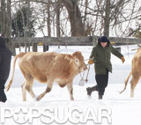 So, Robert Pattinson Is Herding Cattle Now