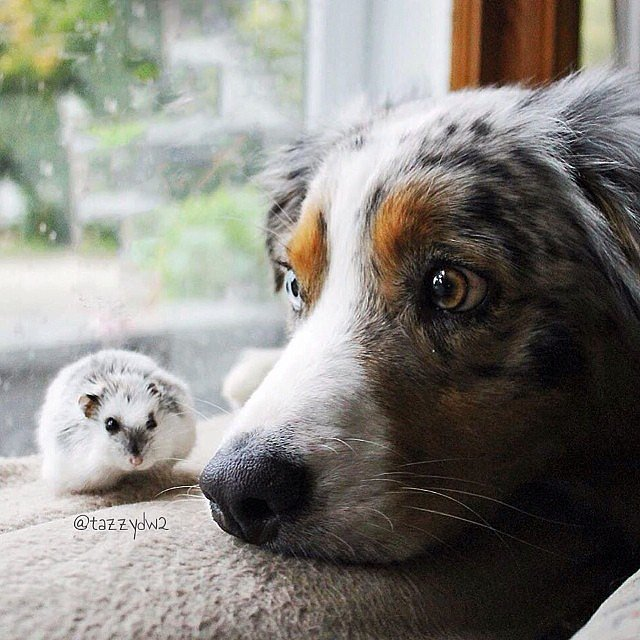 The Odd Couple: Unlikely Pet Friendships