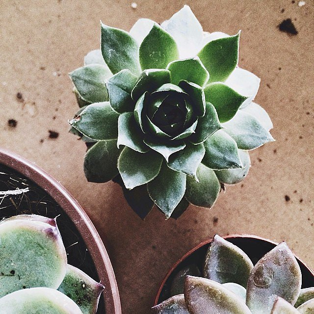 Embrace the Succulent Trend