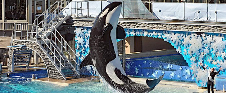 Is It Time to Free Willy Once and For All?