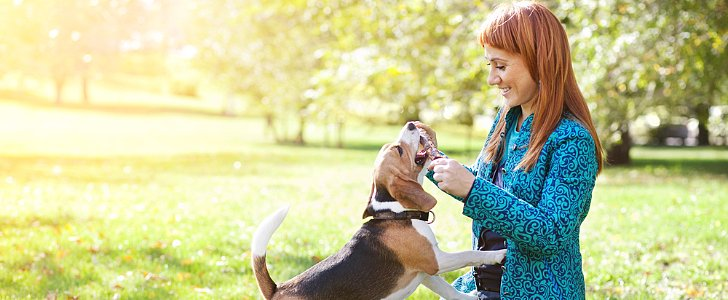 Not a Joke: Great Relationship Advice From Dogs