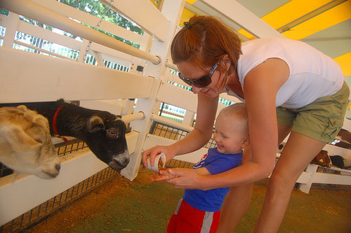 Farms and Petting Zoos