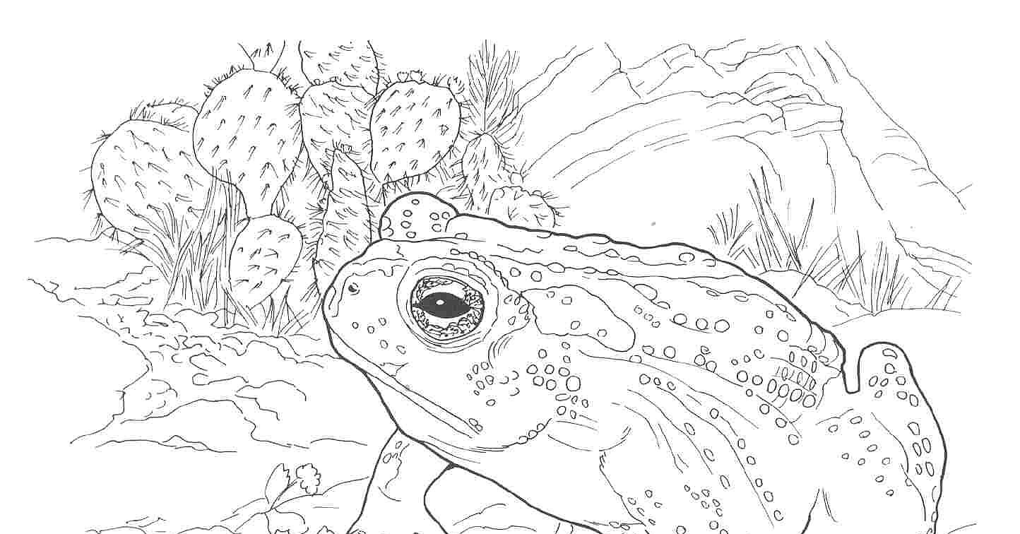 Free Coloring Pages Of Desert