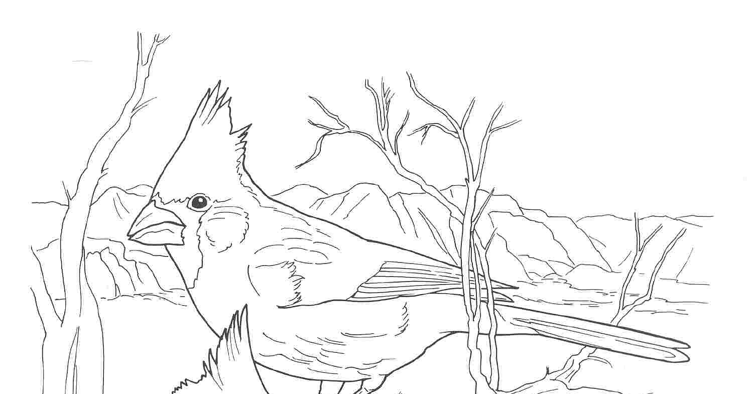 az cardinals coloring pages - photo #16