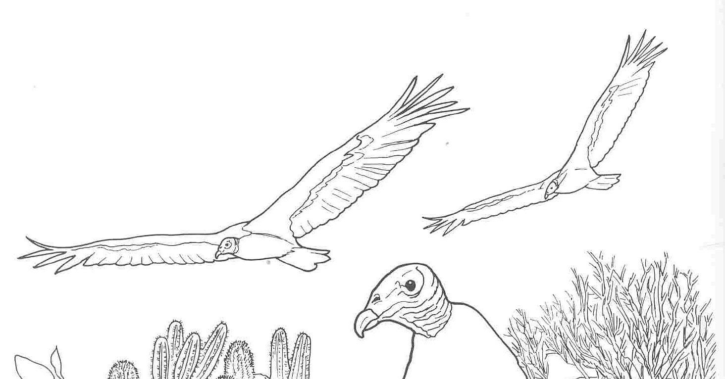 Free Coloring Pages Desert Animals : Free coloring pages of canimals desert