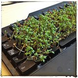 Grow a garden in your co-worker's keyboard.  Source: Instagram user gistiger