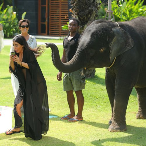 Kim Kardashian Taking Selfie With Elephant in Thailand