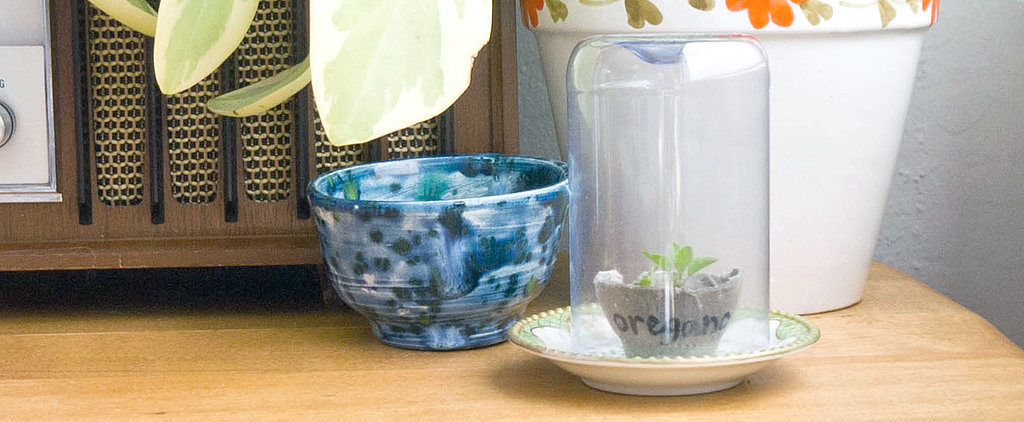 Grow Your Own Garden in This DIY Mini Greenhouse