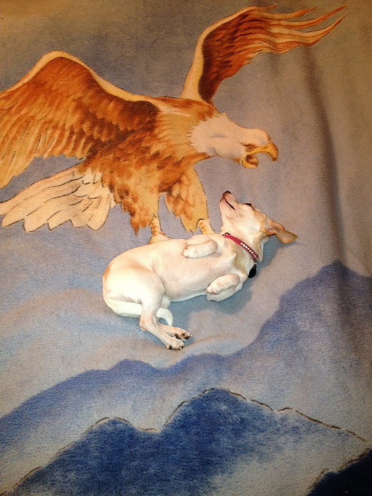 """Dog lay just right on my new blanket."" Source: Reddit user undonk2013 via Imgur"
