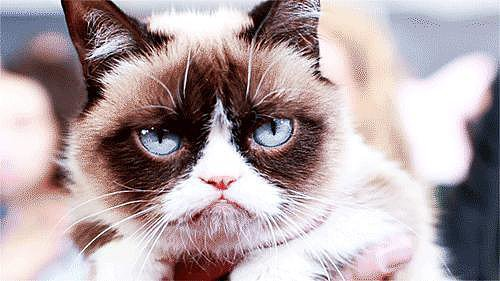 When Grumpy Cat Was Simply Not Having It