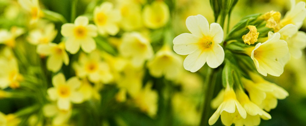 5 Gardening Apps to Help You Bring May Flowers