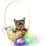 Easter Safety For Pets