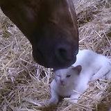 Kitten and Horse I Video
