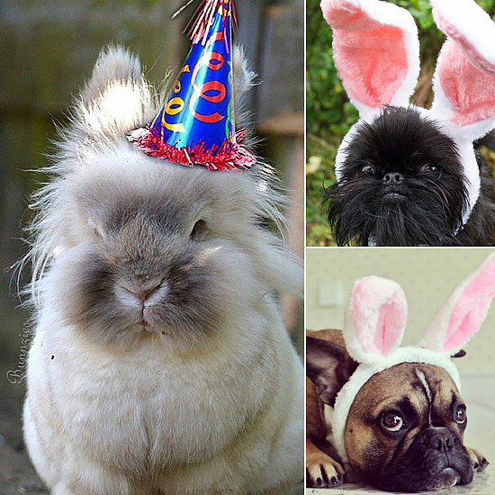 These Pets Are Super Excited About Easter