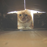 10 of Our Favorite Pictures of Cats in Their Cardboard Castles