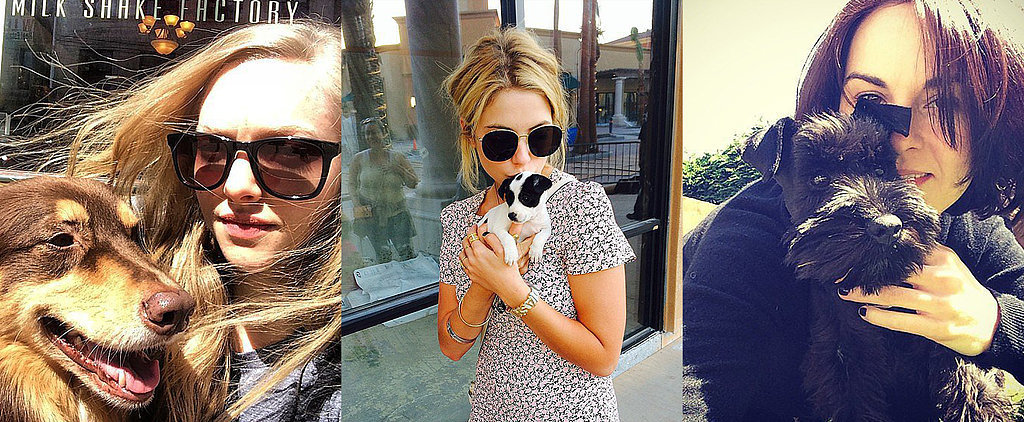 Lots of Licks Between April Celebrities and Pets