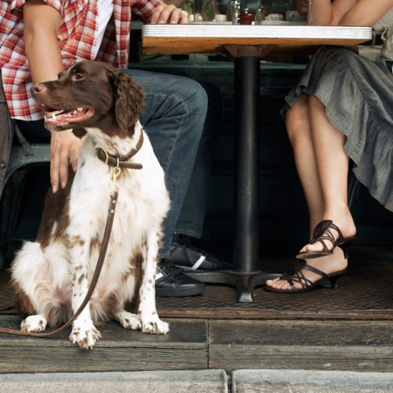 8 Steps to Take When Dining Out With Your Dog