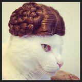 The Princess Leia