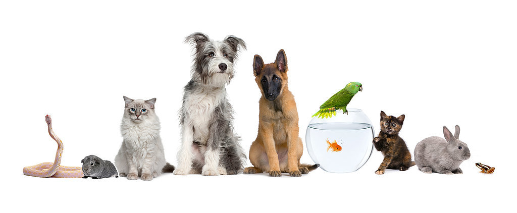 Which Pet Is Best For Your Family?