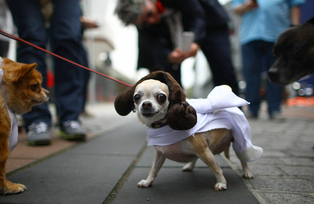 Dogs With Geek Costumes Way Better Than Yours