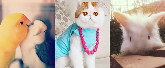 The Most Epic Collection of Adorable Pets Ever