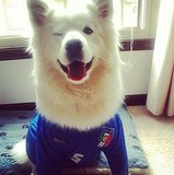 This dog is winking at all his fellow Italy fans while rocking a jersey.  Source: Instagram user rvel21