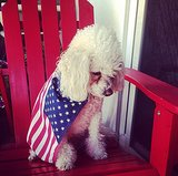 This pup doesn't seem too enthused about Team USA's efforts. Source: Instagram user luiza360
