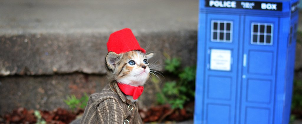 Is There Anything Cuter Than Cats Dressed as Geek Characters? (No)