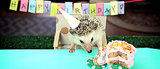 Watch a Tiny Hedgehog (and Tiny Hamsters!) Eat a Tiny Birthday Cake
