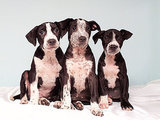 Adopt Us! These 'Chain Gang' Pups Were Saved from Neglect