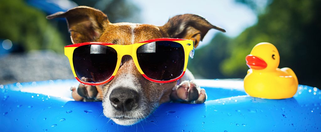 8 Frozen Treats For Summer-Lovin' Dogs and Cats
