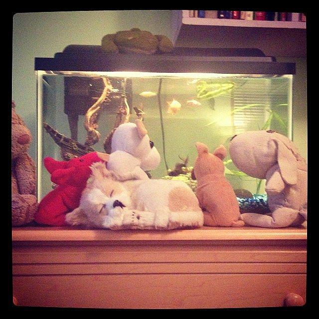 Aquarium Audience