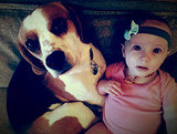 "Charlie the Beagle ""Apologizes"" to Baby by Piling Her With Toys"